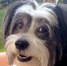 Mollie2014-08-02